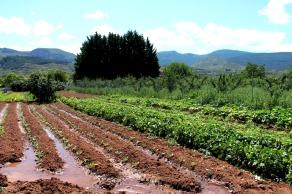 Huerta ecológica en Nalda